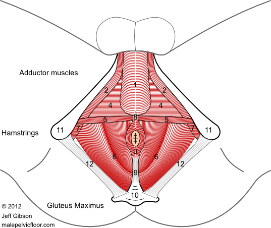 Male Pelvic Floor: Advanced Massage and Bodywork