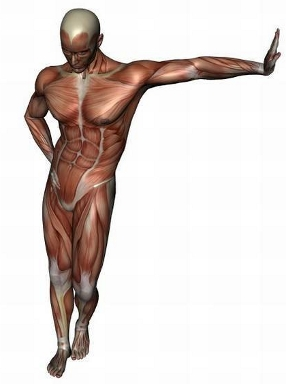 anatomy man image